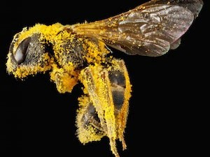 The buzz about bees and climate change