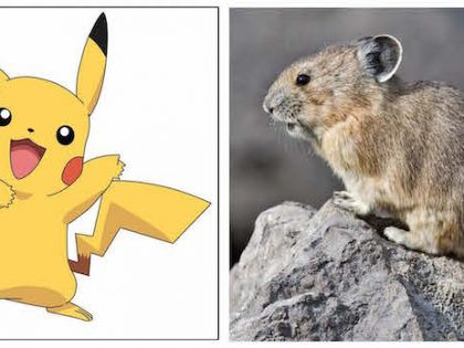 Save the real-life Pokemon from climate change! Put a fee on carbon